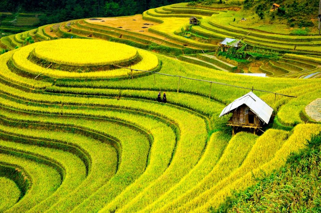 laos green fields
